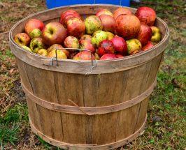 Az alma legjava: népszerű a magyar cider